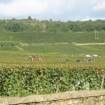 Burgundia - zbiory winogron - lubimywino.pl