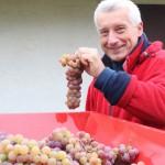 Winiarnia Degustacje Win Szkolenia Piwniczka Folwark Stara Winiarnia Mszana Dolna