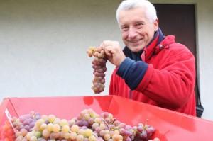 Zbiory winogron Winnica Kasztela+äska lubimywino.pl Folwark Stara Winiarnia (29)