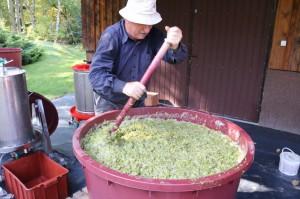 Zbiory winogron w winnicy Krokosz+-wka - G+-rska odmiana SOLARIS - KLUB WINA www.lubimywino (14)