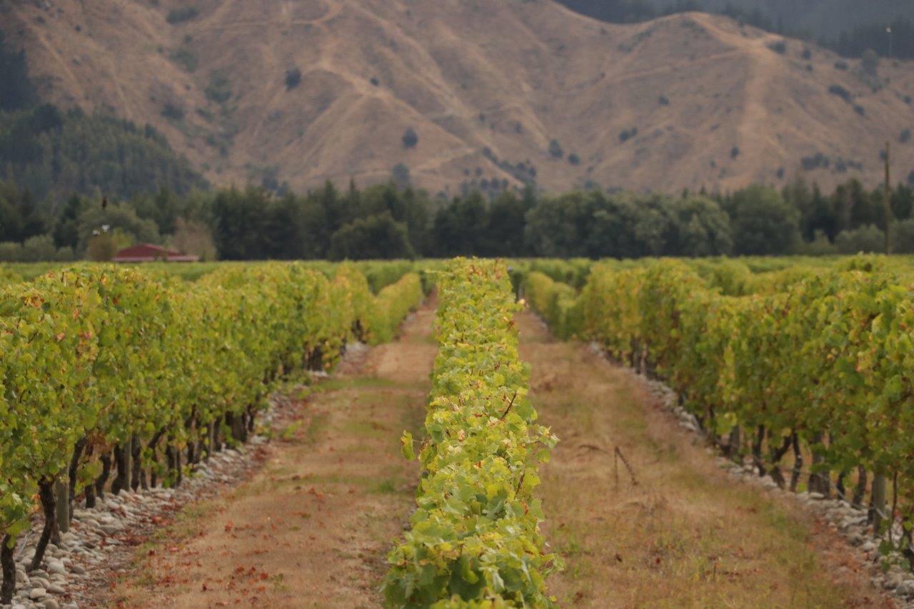 uprawa winorośli praca w winnicy